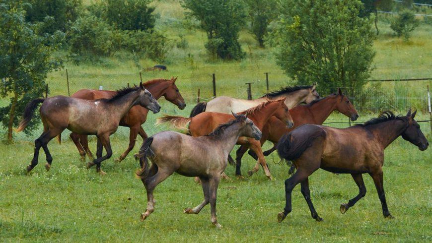 Пенсионеры конного клуба «Данира»