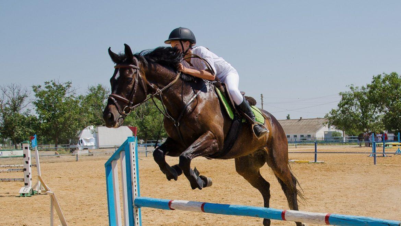 Мы в конном спорте (как все начиналось)